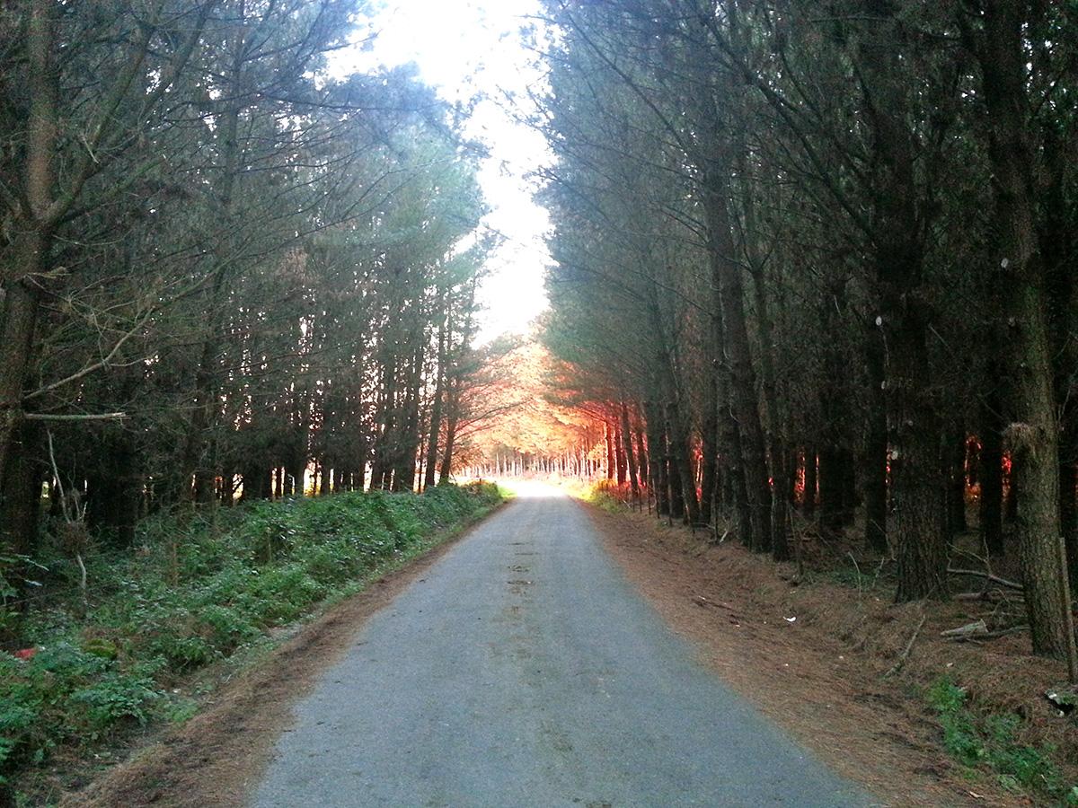camino-de-santiago-6