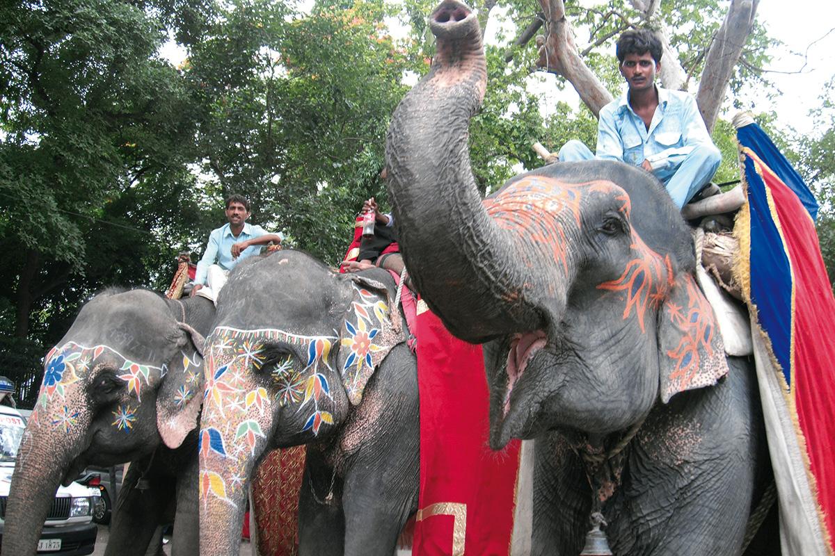 new-dehli-elefantes