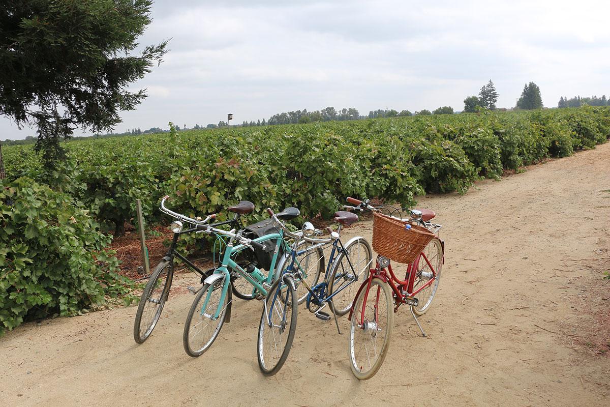 Lodi-bicicletas-antiguas-en-vinedo-