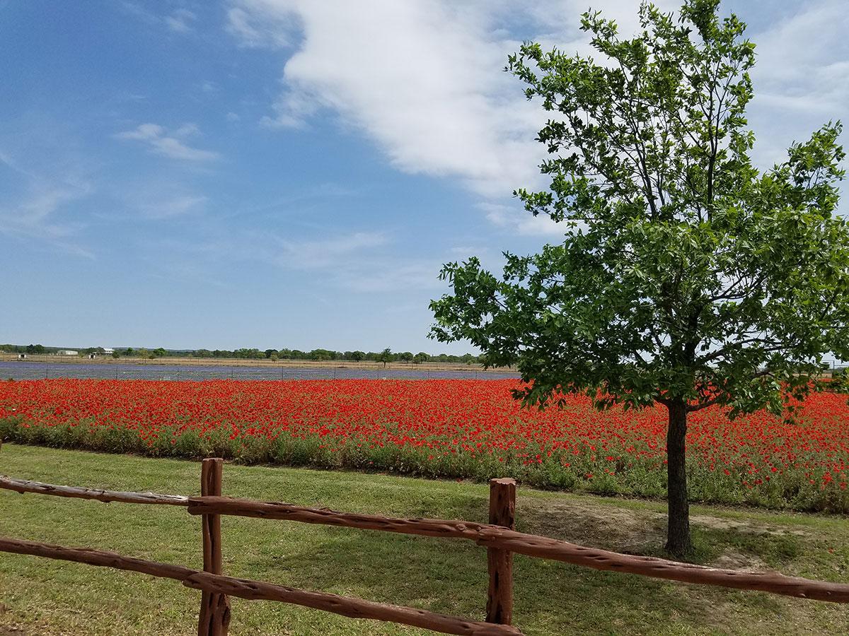 Fredericksburg-Texas-Wildseeds-farm