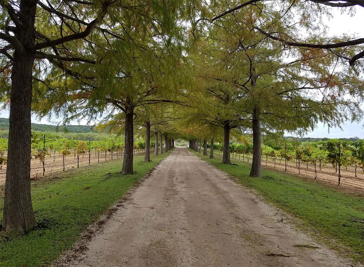 Texas-High-Hill-Country-Fall-Creek-Wineyard